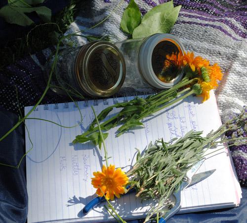 Denver herb school