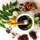 Artemisia and Rue community herb classes Shelley Torgove